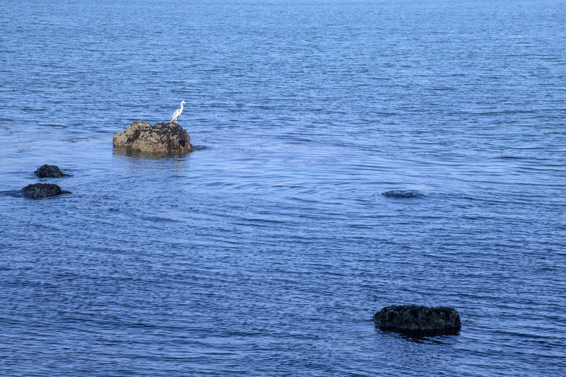 View of duck swimming in sea