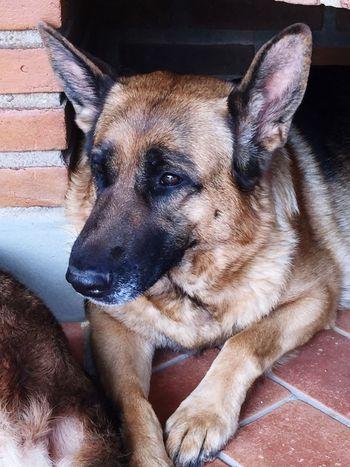 One Animal Dog Canine Pets Domestic Mammal Domestic Animals