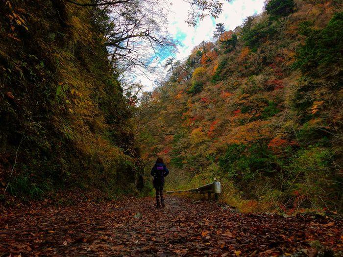 Rear view of man walking in forest