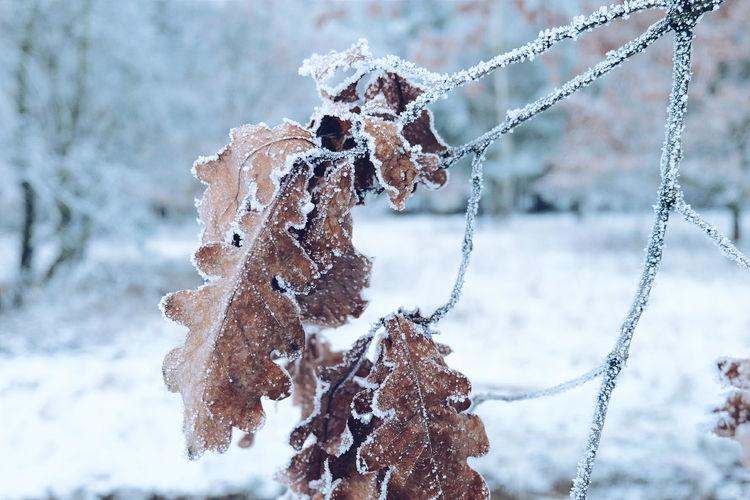 Winter Outdoors Nature Fujifilm X-E2