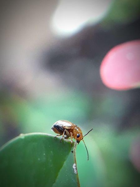 little bug orange feeding juicy young leaf nyam nyam nyam EyeEm Selects Insect Spider Web Spider Close-up Animal Themes Survival Leaf Vein