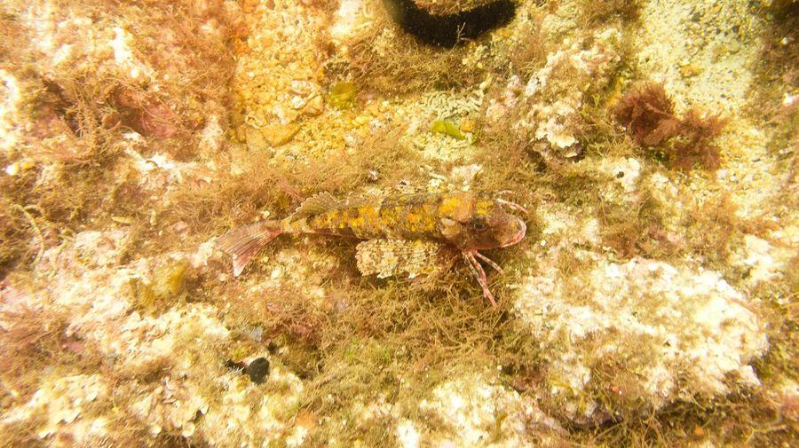 Sea Scuba Diving SCUBA Taking Photos
