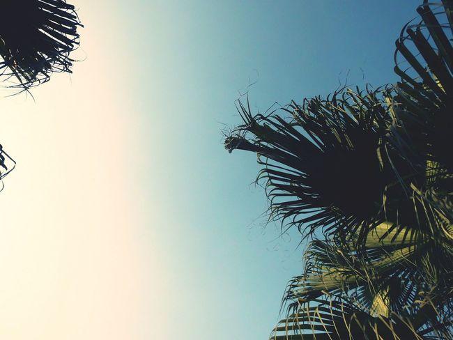昨天阳光灿烂 今天死气沉沉