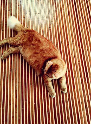 Jimmy Mycat Cat Lovers 😁