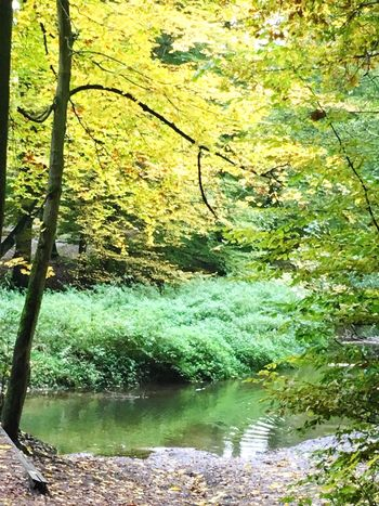 Nature Water Green Color Outdoors Scenics Beauty In Nature River Forest No People Germany Hamburg