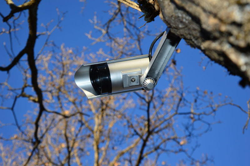 Low angle view of camera on tree against sky