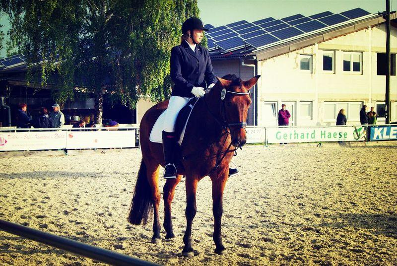 Turnier Horse Horse Riding Taking Photos