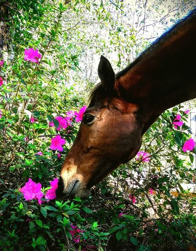 Stop And Smell The Flowers Horses Animals Spring Fling Springtime Azeleas Long Neck  Stop And Smell The Roses Sniffing Take A Whiff Millennial Pink Long Goodbye The Secret Spaces Secret Garden Ooh That Smell Live For The Story