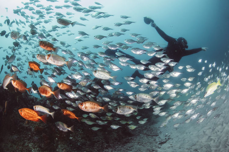 Low angle view woman swimming by fish in sea