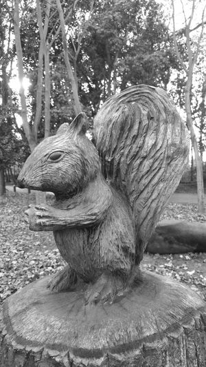 Wooden Sculpure Squirrel Black And White Photography Samsung Galaxy Note 4 Monochrome Black And White