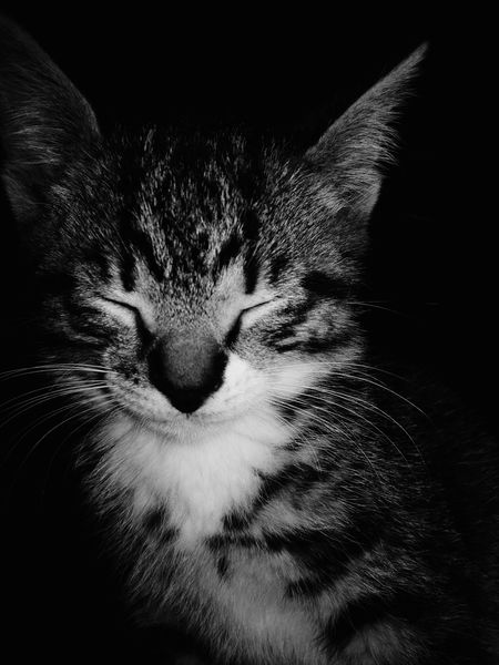 Kitten satisfied with black background. Kitten Black And White Black Cats Myfriends Majestic Animal Cat-ching Background Catsoftheworld Catsofeyeem Satisfied  Kittens Kittens Of Eyeem Katzen Cats Of EyeEm Cat Animals Black And White Black Feline Black And White Photography Dark Background