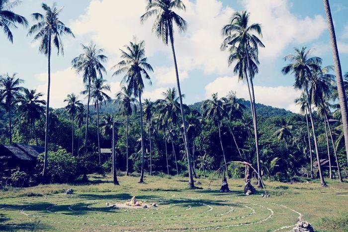 Thailand Koh Phangan Palm Trees Enjoying Life Holiday Outdoors Subshine Grass Stones ASIA Celebration Spirituality Hippie Blue Sky Nature Exploring Life Shakti EyeEm Nature Lover