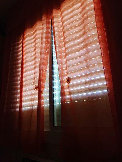 Silhouette of cat on window