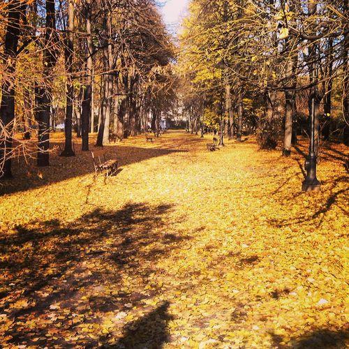 Autumn Colors Eyeem Best Photo Taking Photos Popular Photos