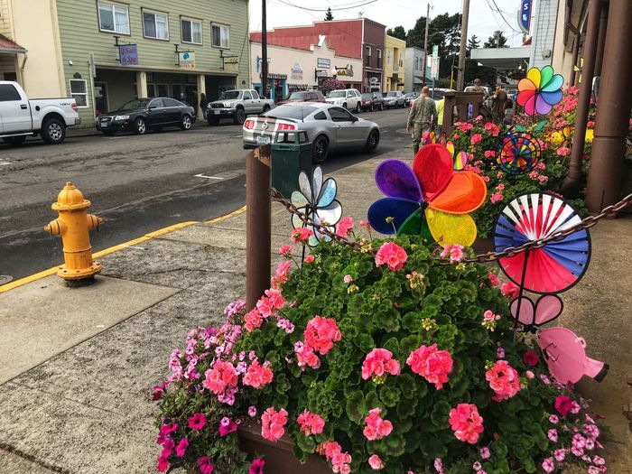 Florence, Oregon Oregan Coast Small Town Stories Oregon Florence, Oregon Flower Flowering Plant Plant Architecture Built Structure City Building Exterior Vulnerability  Growth Motor Vehicle Car Land Vehicle Transportation Day Fragility Street Freshness Nature Mode Of Transportation Multi Colored