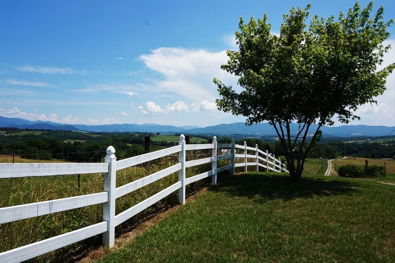 Outdoor Photography Outside Outside Photography Nature Beauty In Nature Tree Rural Scene No People, Gravel Road Rural America Rural Landscape Rural Scenes Mountain Range Mountains And Sky Foothill Blue Ridge Mountains Foothills Mountains Fences Fences & Beyond Fence Photography Fence Live For The Story