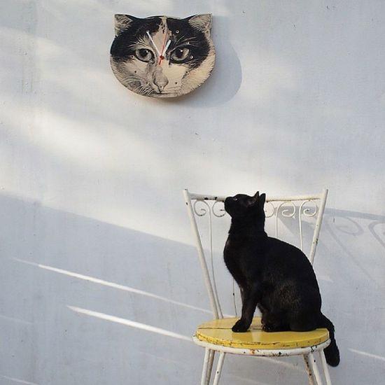 Cat Time Black Cat BLackCat Cat Animals