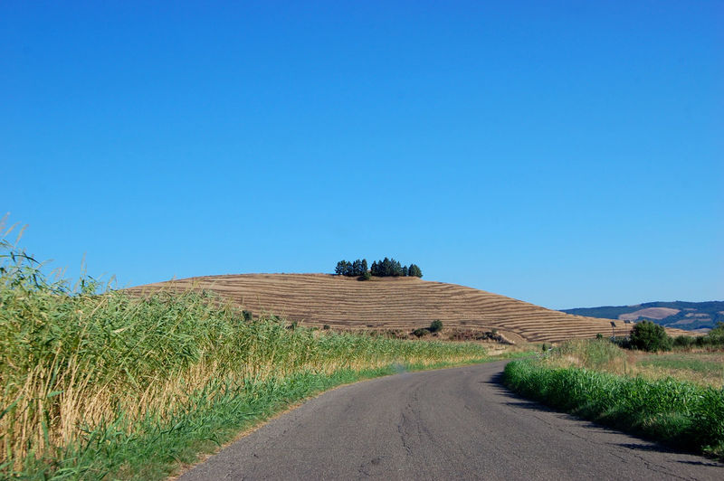 Road amidst agricultural field against clear blue sky