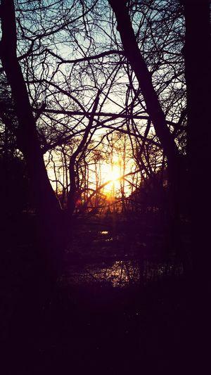 Taking Photos Sunset Nature EvningGlow