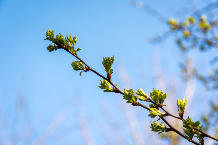 Spring. Beauty In Nature Botany Confidence  Day Fragility Green Green Color Green Leaflets Growing Growth Hope Leaflet Leaves Nature New Life Plant Selective Focus Spring Springtime Twig