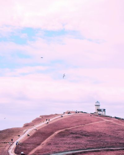 Airy Minimal Pink Airy Freash Coastal Coast Lighthouse Bird Flamingo Flying Sea Beach Sand Nautical Vessel Colony Water Sunset Low Tide Tide