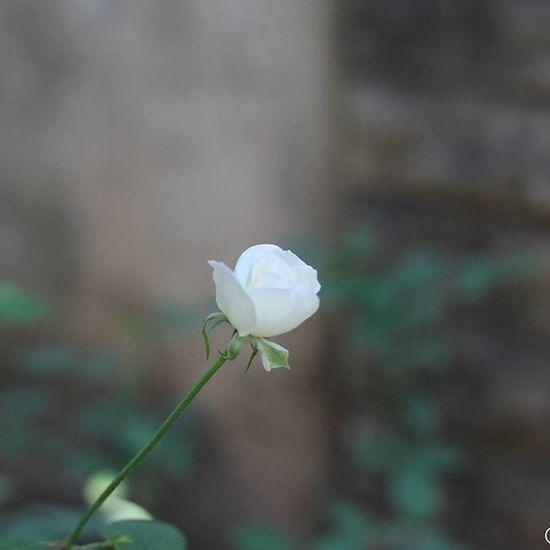 Random photography. Macrophotography Shahzebinc