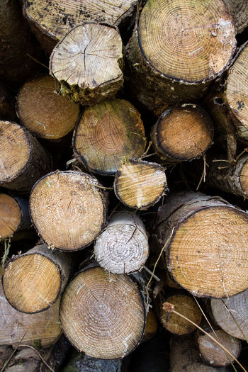 A stack of logs that have been piled up and felled by a chainsaw. Arrangement Backgrounds Close-up Deforestation Environmental Issues Firewood Forestry Industry Fossil Fuel Fuel And Power Generation Full Frame Heap Large Group Of Objects Log Lumber Industry No People Pattern Pile Shape Stack Textured  Timber Wood Wood - Material Woodpile
