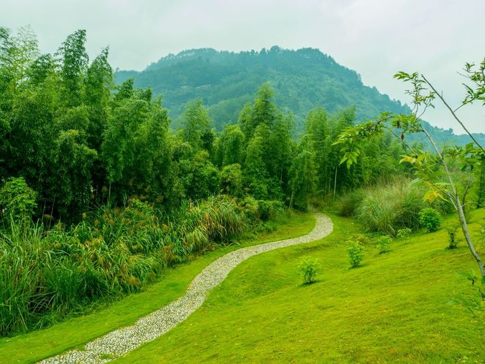 The Path Along The River Hello World Walking Around Getting Inspired Taking Photos Fresh Air Green Green Green!  Enjoying The View Riverside Nature_collection
