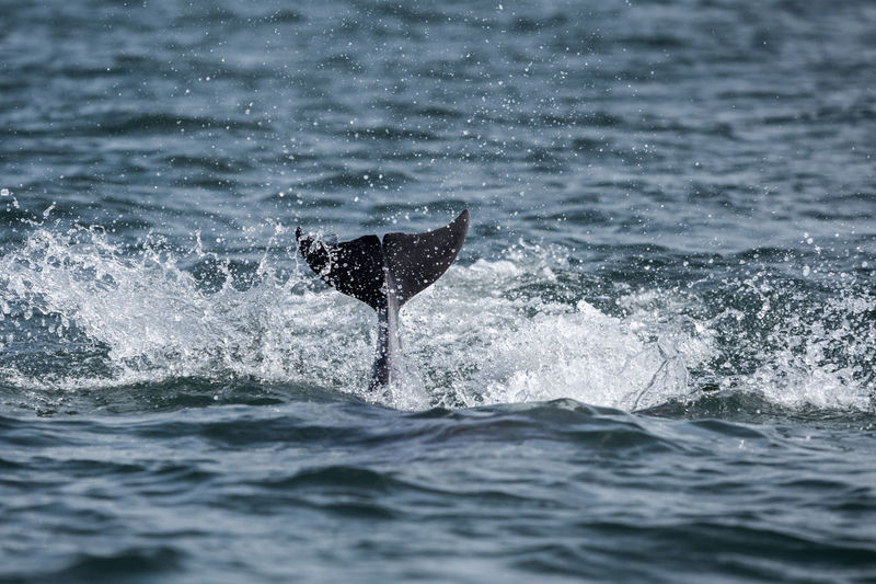 View of dolphin tail in sea against sky