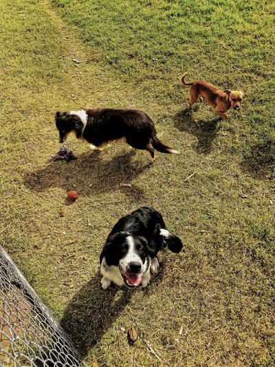 High angle view of dogs on field