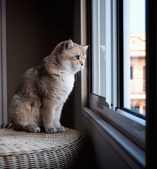 Close-up of cat sitting on window sill at home