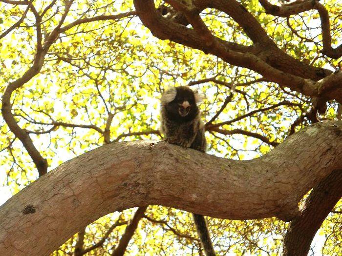 Sagui Sun City Brasil Animal Species Of Monkey Beutiful