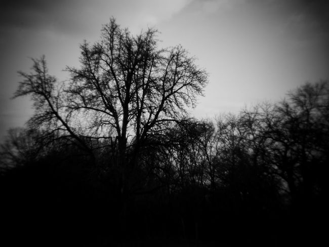 tree and sky / arty Arty Black & White Holga Holga Photography HolgaArt Art Arts Culture And Entertainment Bare Tree Beauty In Nature Blackandwhite Blackandwhite Photography Branch Day Holgalens Holgastyle Lone Nature No People Outdoors Sky Tranquility Tree Trees And Nature Trees And Sky Treescape