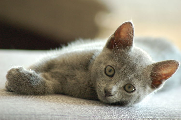 Relaxing Enjoying Life Cats Animal Tranquility No People Nature Focus On Foreground Cat Chilling Hi! Animal Themes Russischblau Russian Blue Cat