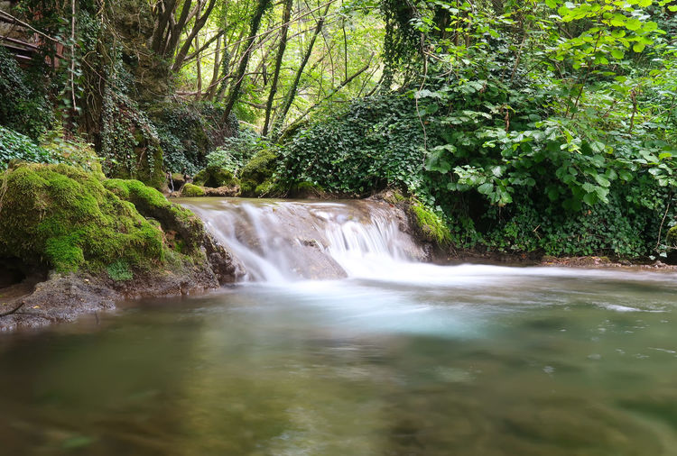 Beautiful cascade of a creek Creek Nature Beauty In Nature Cascade Clean Flowing Flowing Water Forest Green Color Growth Landscape Lisine Motion Nature No People Outdoors Plant Power In Nature Rainforest Scenics - Nature Spring Stream Tree Water Waterfall