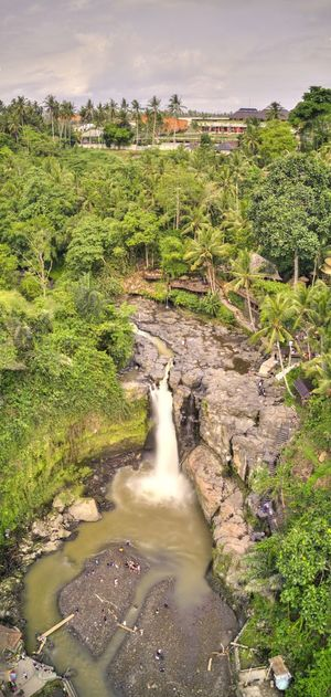 Aerial view of Tegengungan Waterfall in Bali. Tegenungan Waterfall, Bali Water Plant Tree Nature Bali Beauty In Nature Scenics - Nature Power In Nature Flowing Outdoors Tranquil Scene Flowing Water Environment INDONESIA Wonderful Indonesia Aerial View Drone Photography Drone Shot