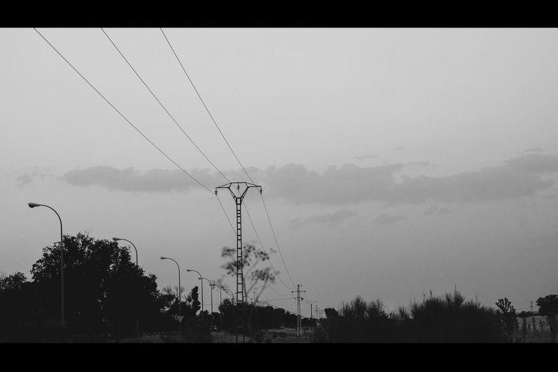 Wires Animals