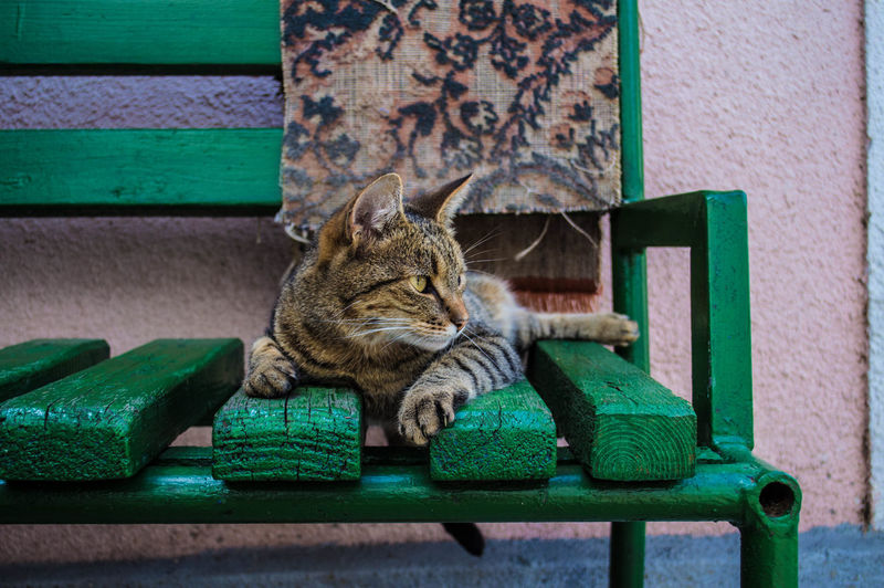 Pet Portraits Animal Themes Close-up Day Domestic Animals Domestic Cat Feline Green Color Mammal No People One Animal Outdoors Pets Relaxation Sitting