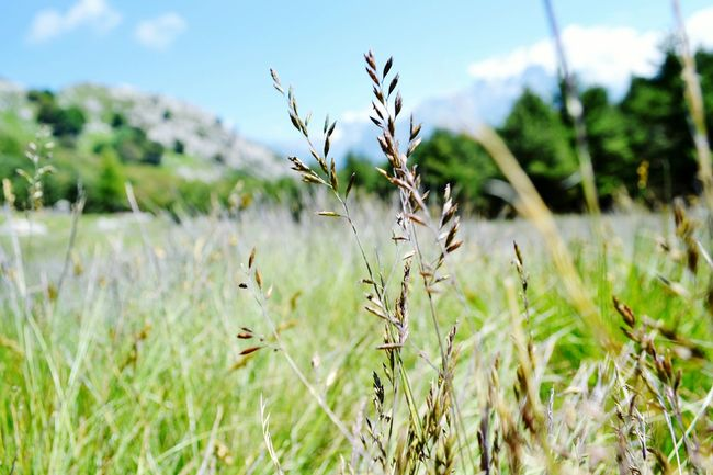 Nature Plant Cereal Plant Field Rural Scene Outdoors Landscape Day Uncultivated Growth
