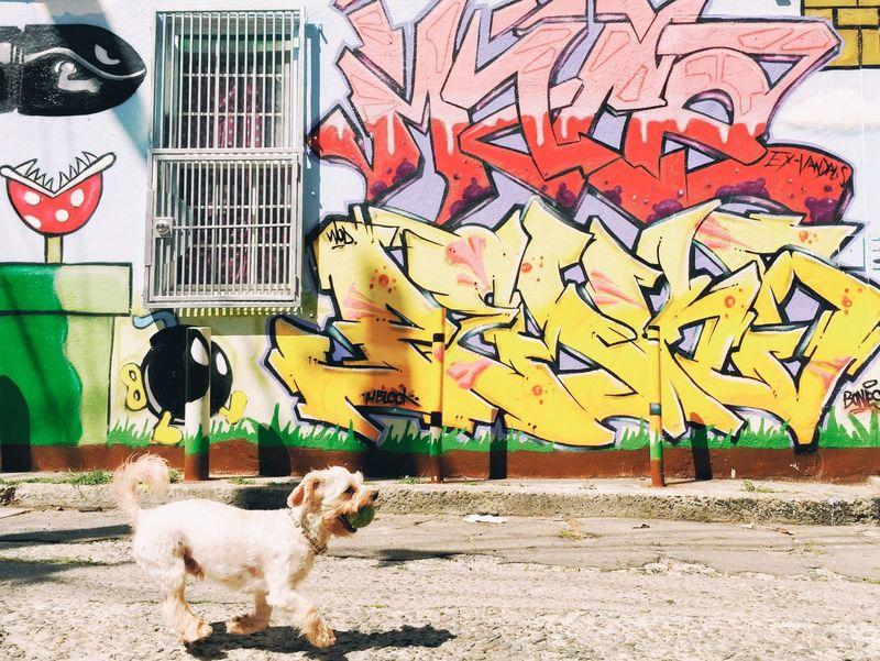 Dog Running Pet Graffiti Fetch Chase Play Puppy Ball Fast