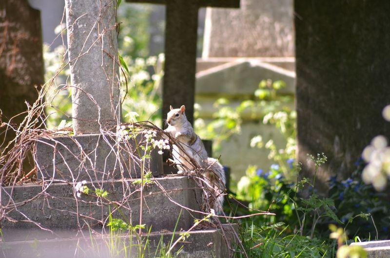 Squirrel in graveyard