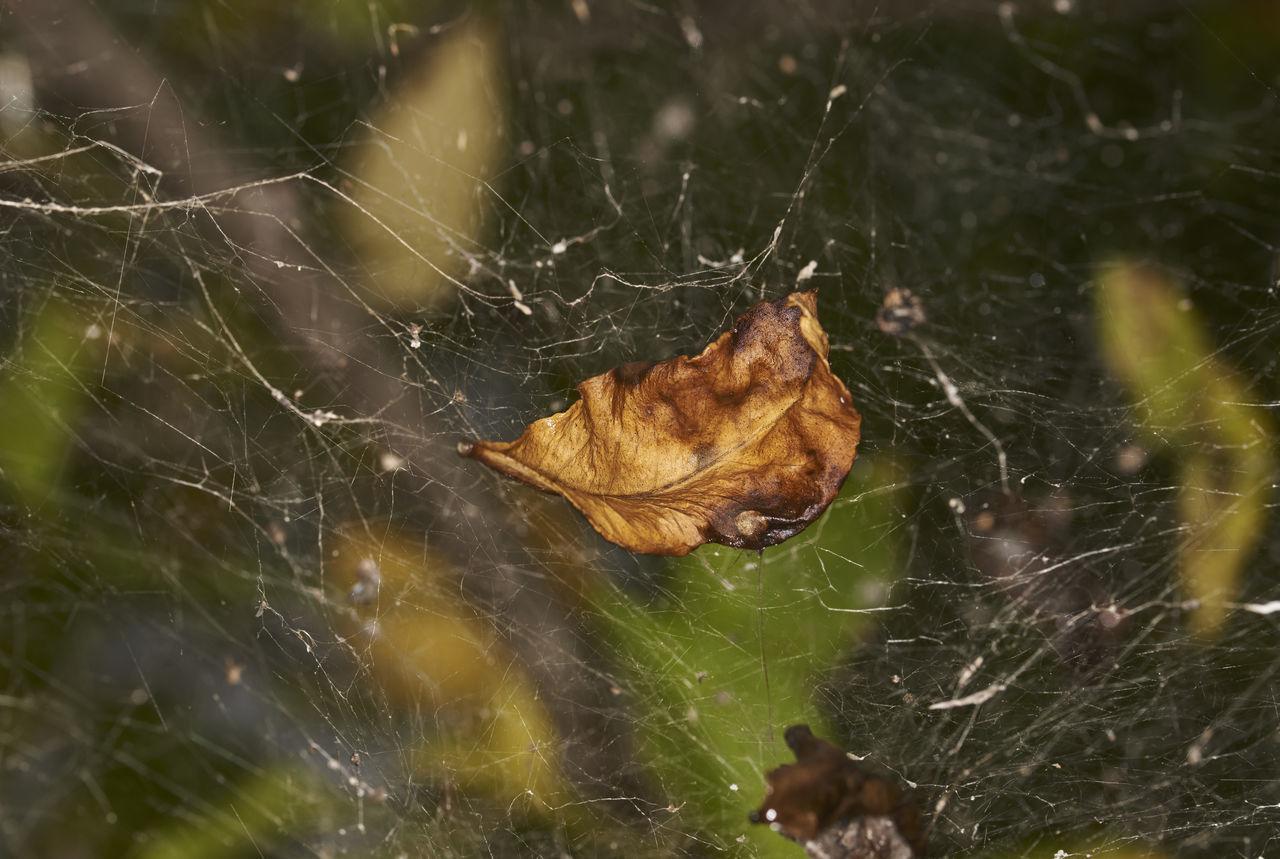 CLOSE-UP OF SPIDER WEB ON DRY LEAF