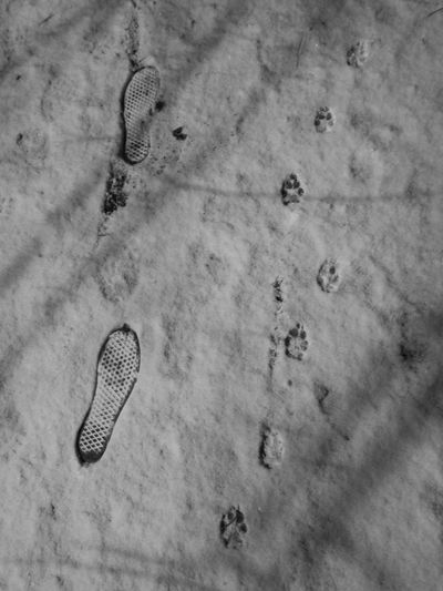 Blackandwhite Nofilter FootPrint Track - Imprint Nature Outdoors Animal Track No People Togheter As One Snow Day Animal Themes