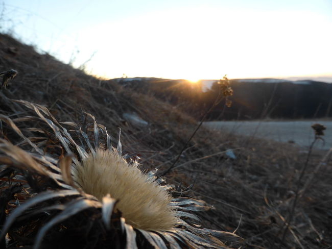 Loving is not just looking at each other, it's looking to the same direction. Having Fun Sunrise Sunset Horizon Flower Cardo Lovely Mountain Montegrappa Loveit Winter Cold Landscape_photography