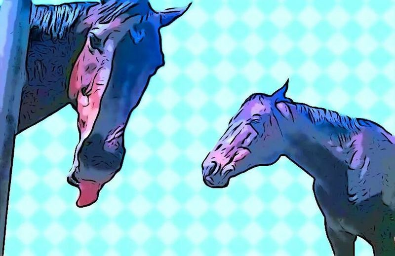 Liz and Cache. Horse Horses Horsing Around Comic Filter