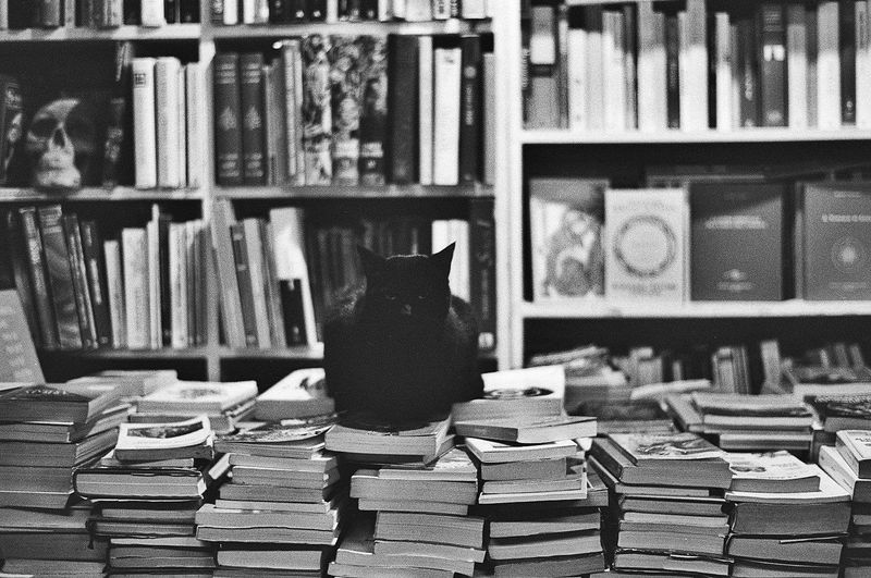 Portrait of cat sitting on books at store