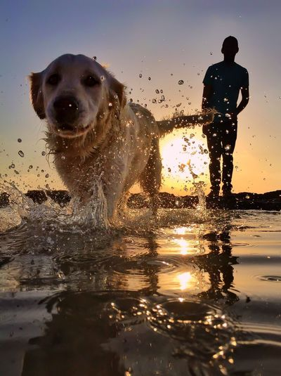 Wet dog by sea against sky during sunset