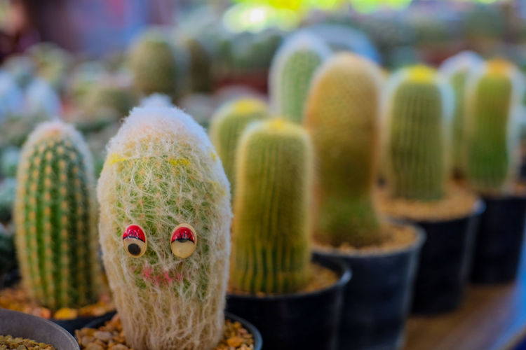 Close-Up Of Artwork On Potted Cactus For Sale In Store