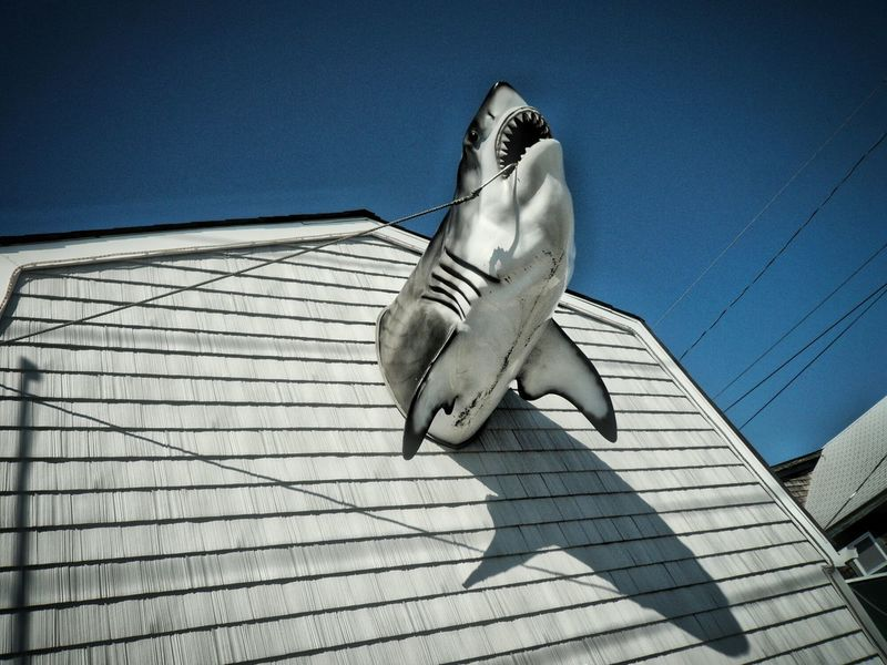 Sharkattack Shark Streetphotography Street Photography Decoration Fishing Time Seafood Sea View Portrait Of America Sharks Shark Attack