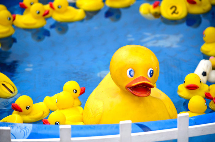 rubber ducks float in a kids swimming pool at a county fair as part of a game for younger children Fun Animal Animal Representation Animal Themes Art And Craft Bird Close-up County Fair Duck Floating Floating In Water Floating On Water Game Multi Colored No People Platic Poultry Representation Rubber Duck Swimming Pool Toy Vertebrate Water Yellow The Still Life Photographer - 2018 EyeEm Awards
